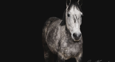 portfolio fonds noirs équins